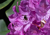 Neighborhood Bee