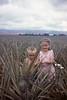 Dole Pineapple Fields