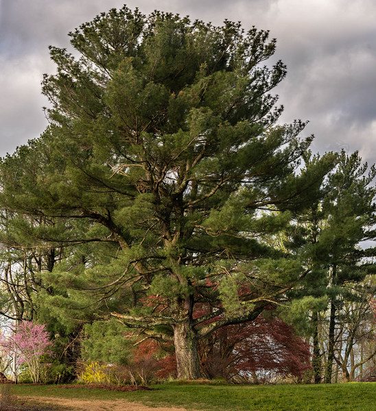Top o' the Hill Tree