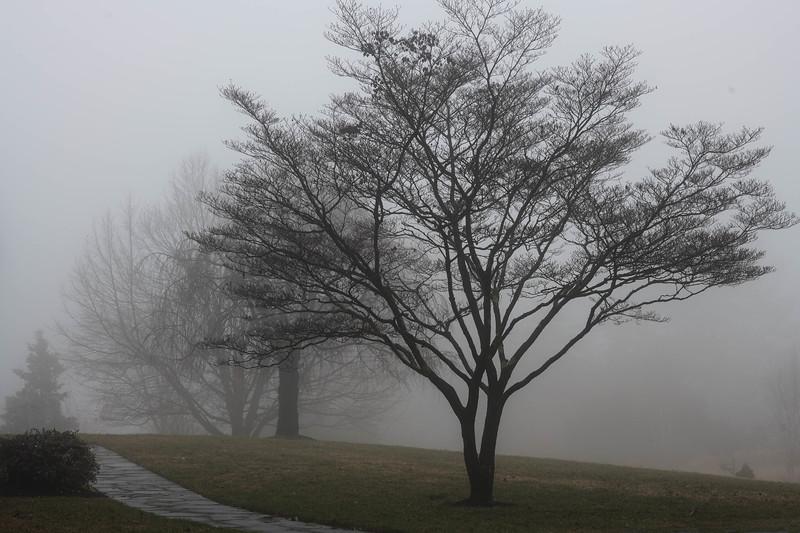 Winter Fog - 2