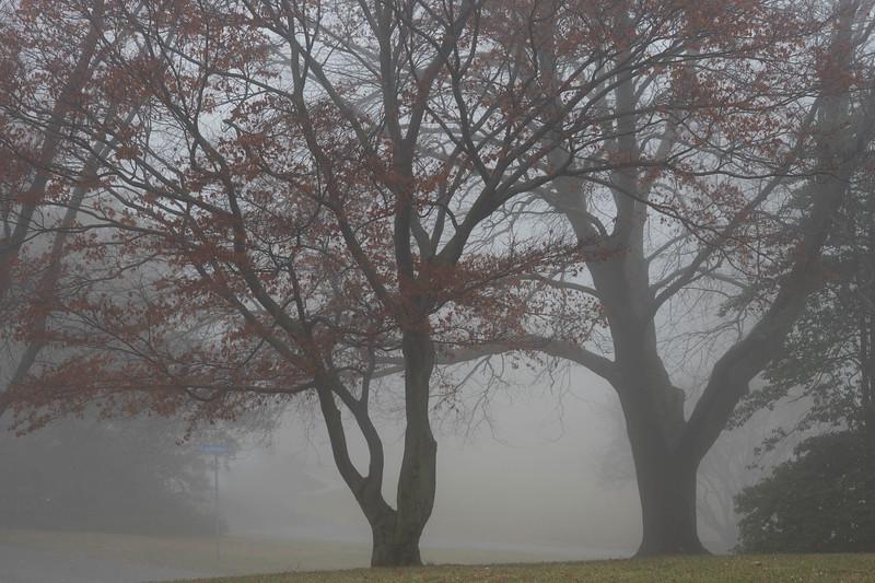 Winter Fog - 1