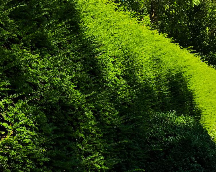 Henry Clay Gardens