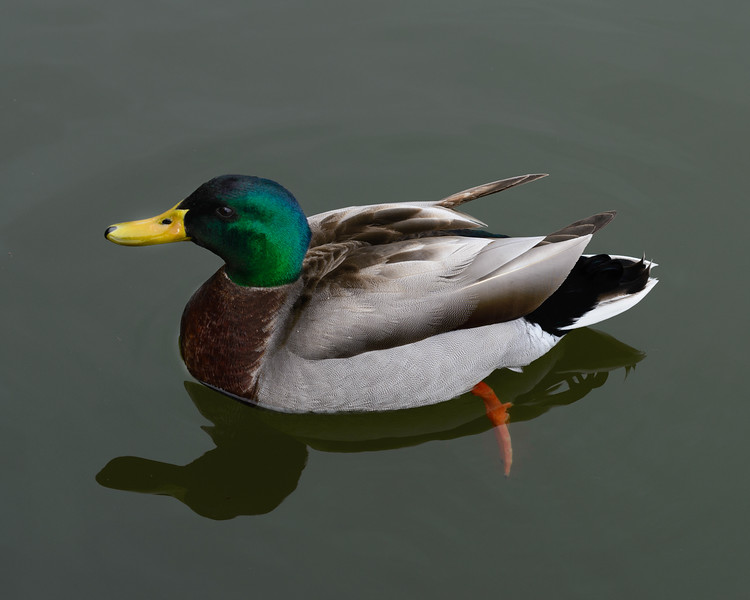 It Looks Like a Duck, and Quacks Like a Duck ... But This is Washington & it May Not Be a Duck