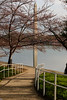 A Rarely Glimpsed View of the Cherry Blossoms and the Washington Monument ... With No People!