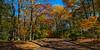 Fall Glory along Valley View Garth