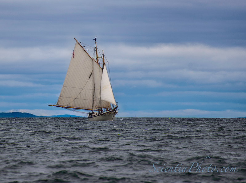 """The Last Ship in """"The Great Schooner Race"""" Approaches the Finish Line 30 Minutes after the Spectators Had Left"""