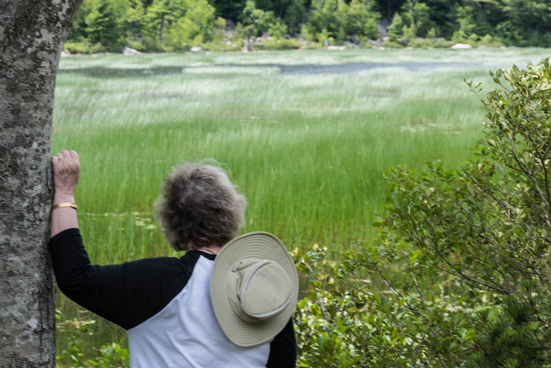 """Nancy Gazing Upon a Reed-Filled Pond (""""The Tarn"""")  in Acadia"""