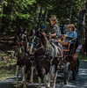Carriage Ride in Acadia National Park