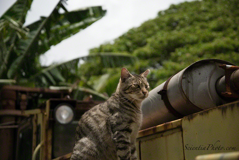 """""""John Deere"""" Surveys the Feral Cat Colony from His Perch on a Tractor"""
