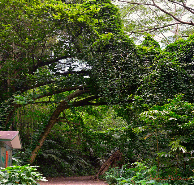 Entrance to the Manoa Falls Trail