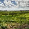 The Kawainui Marsh