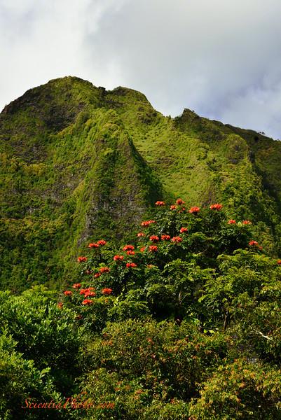 The Nu'uanu Pali from First Presbyterian of Honolulu at Ko'olau
