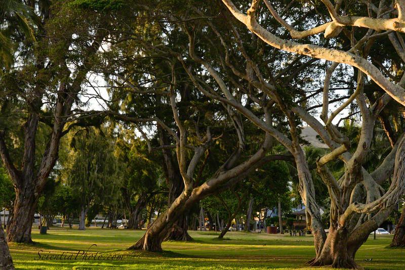 Kailua Beach Park in the Golden Hour