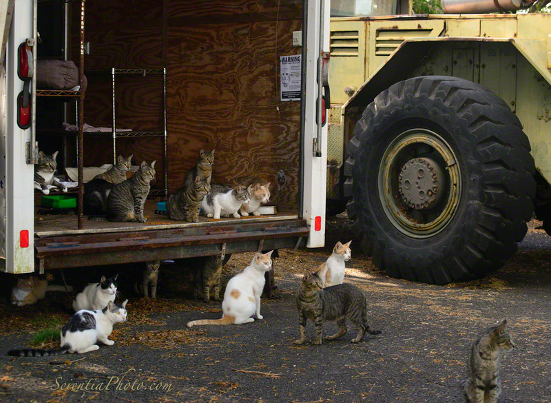 "The Feral Cats of Heeia & Their ""New"" Bunk Wagon"