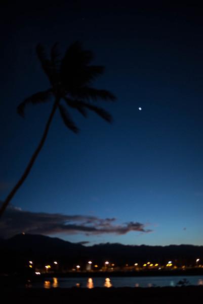 Venus and a Palm Tree at Sunset Beach