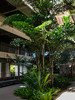 Interior Gardens - 2