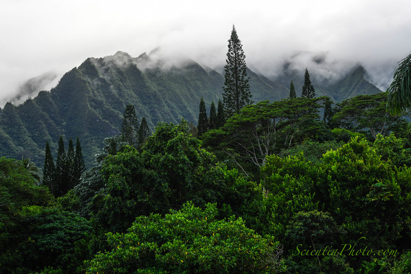 The Pali from Kaneohe