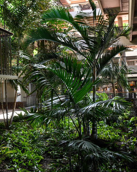 Interior Gardens - 3