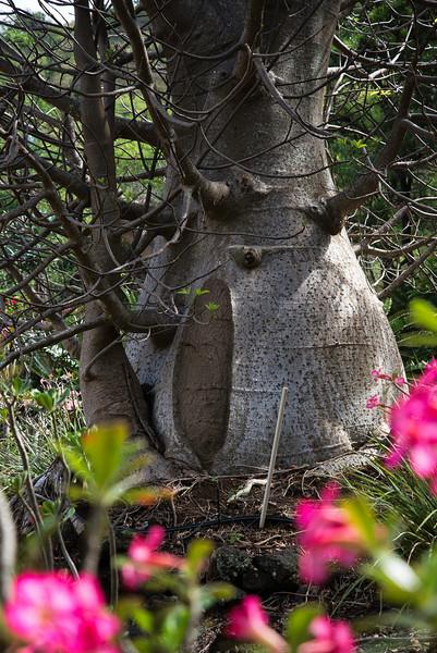 Baobab Tree or Hobbit House?