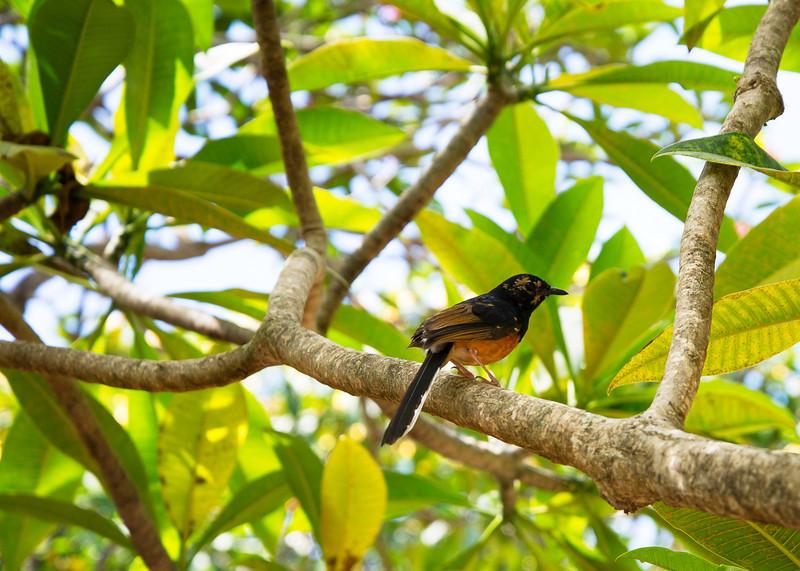 A Bird (No Duch!)