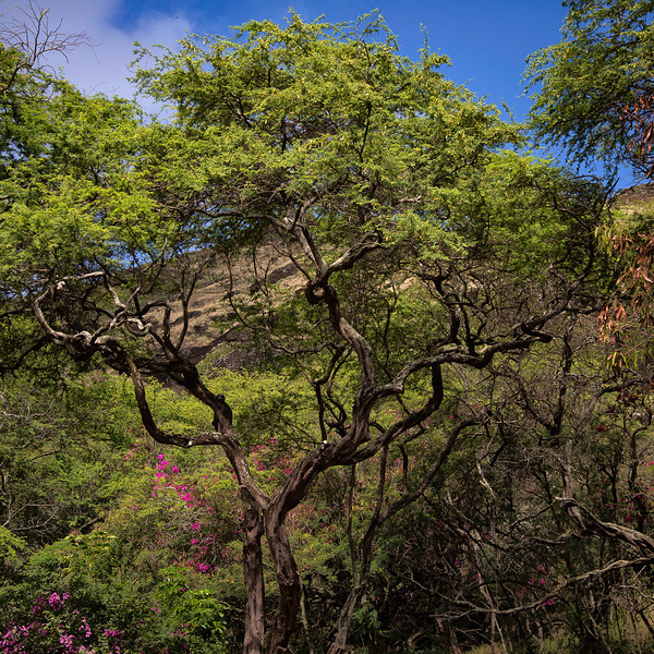 Koko Head Crater Botanical Garden