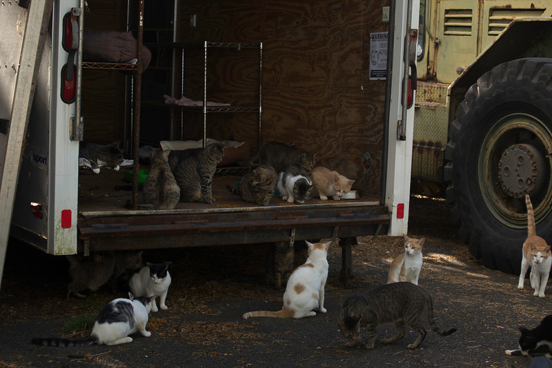 The Feral Cats of Heeia