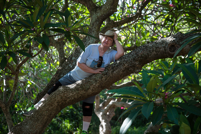 Nancy up a Tree in Koko Head Crater Botanical Gardens