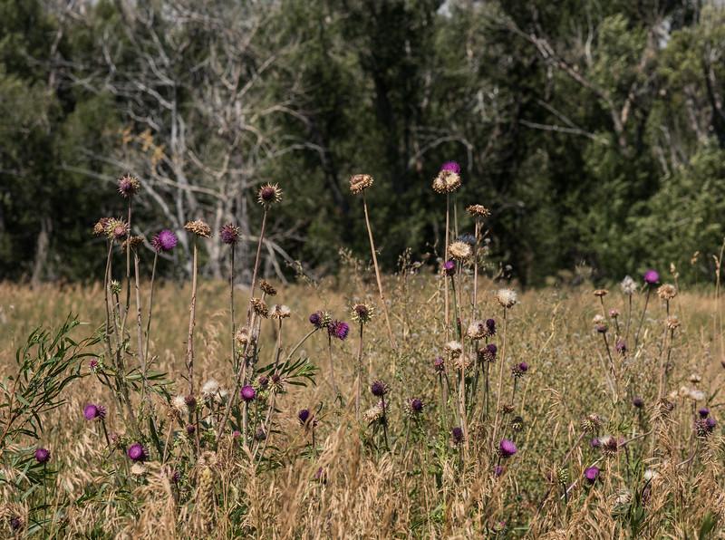 Wildflowers at Moonshadow Acres