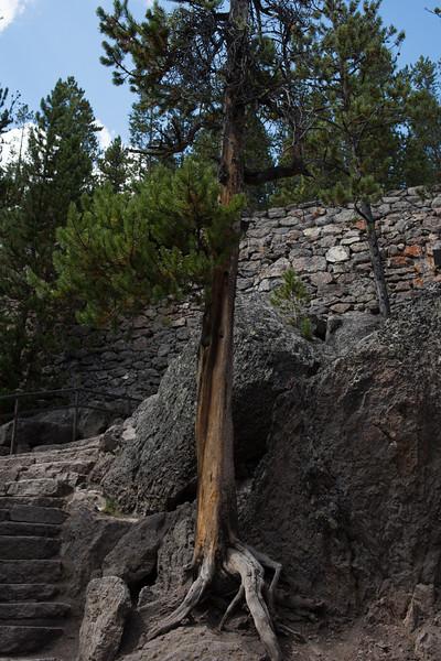 Tree Struck by Lightening
