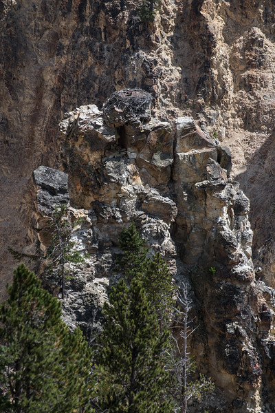 Osprey Nest in the Grand Canyon