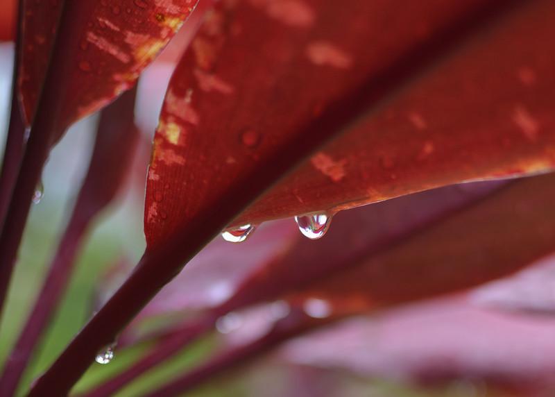 Refractions after a Rain Shower: Kailua B&B