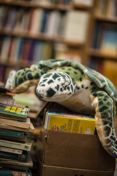 Stuffed Turtle Swims Among the Books at Book Ends