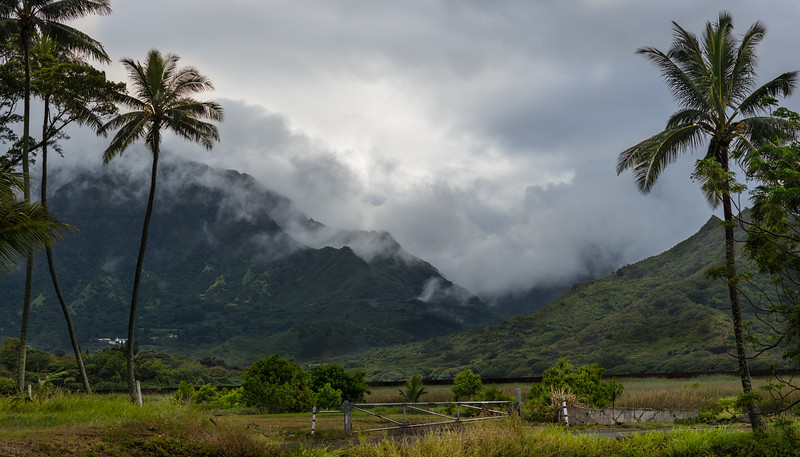 The View from Behind the KFC in Kailua (!)