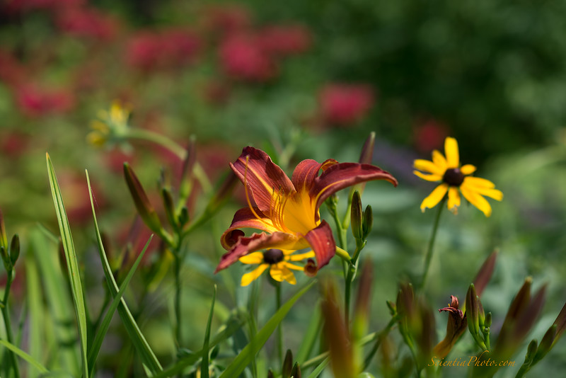Flowers at Jordon Pond