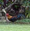 "Kauai ""Bird of Paradise"""