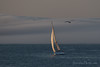 Sailboat and Gull (Perkins Cove, Maine)