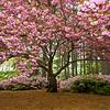 Norfolk Botanical Garden (NBG)
