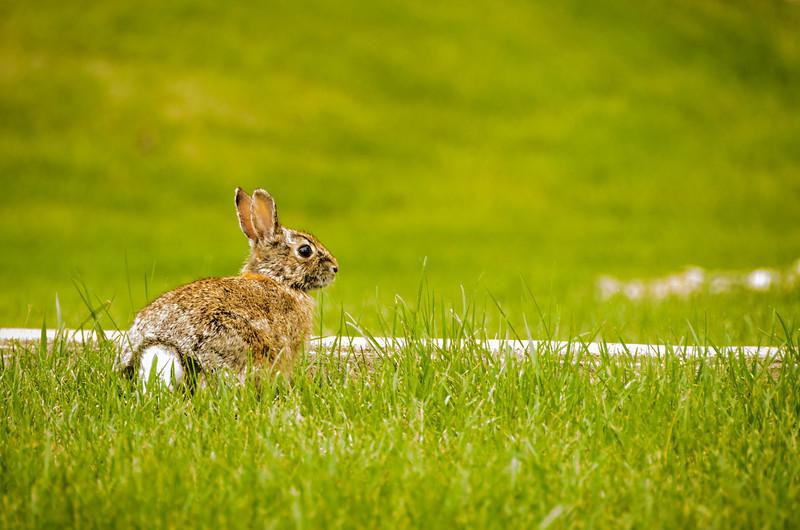 Cautious Rabbit