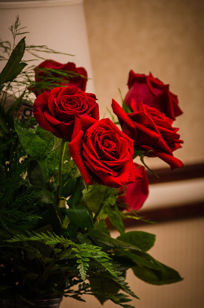 Tradition Roses
