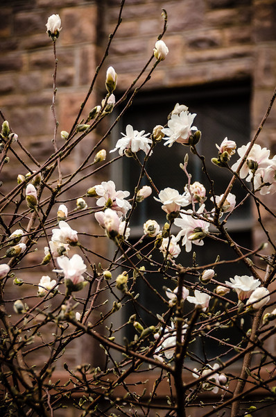 Bloom in Spring