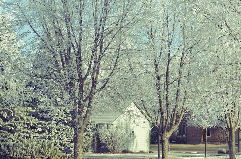 Frozen Fog Trees