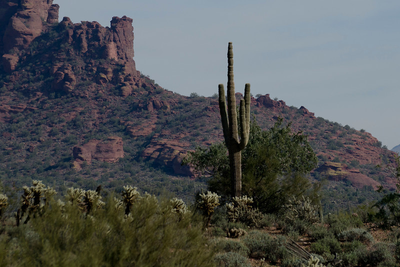 Yet, MORE Cactus + Mountain, yea, that's still original.<br /> Yeah, WE get it--America the Beautiful.<br /> What's up next, a bald eagle?!