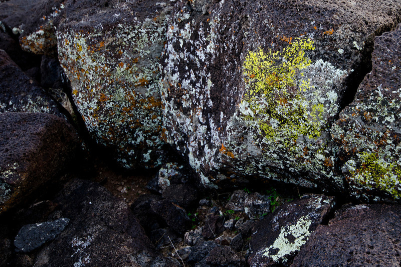 I'm lichen these rocks.