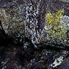 I'm lichen these rocks.