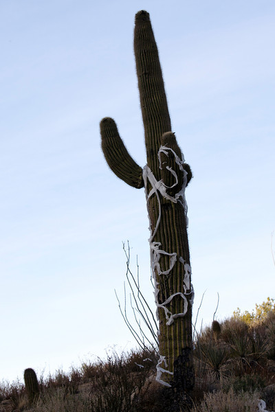 In Arizona, they don't just TP your house –– they go after your cactus, too.