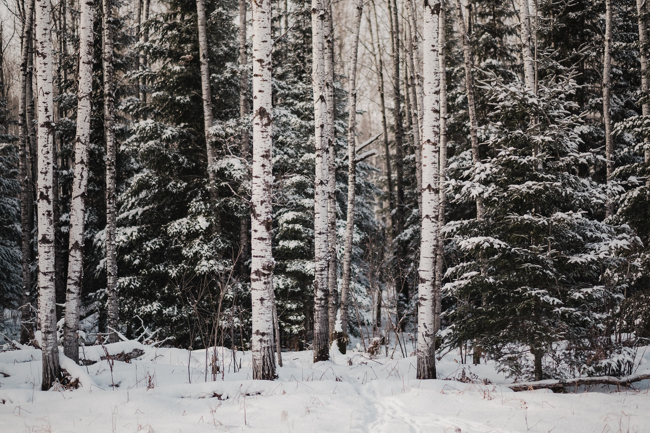 Pines & Popples | Angora, MN