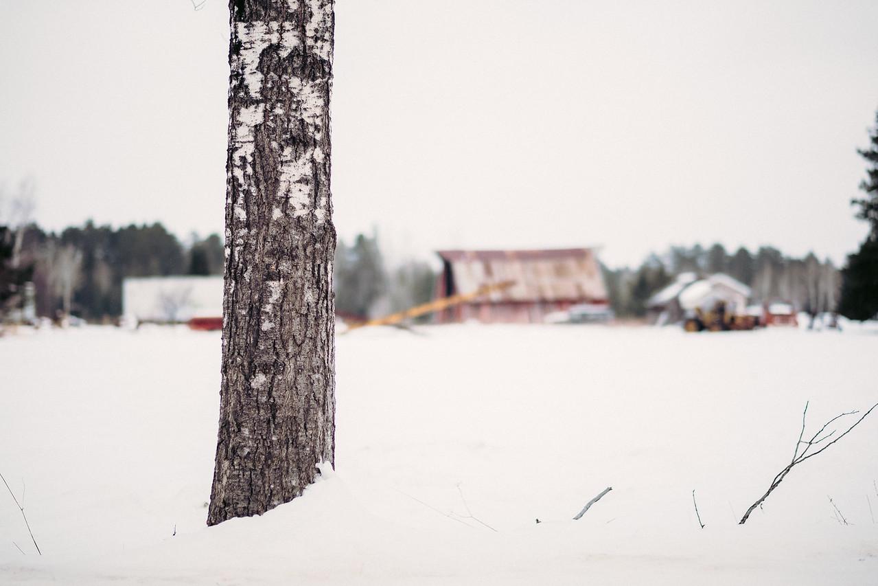 Farmyard | Angora, MN