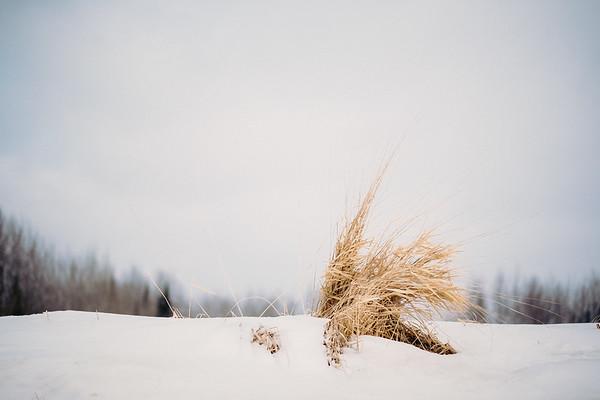 Winter Minimalism