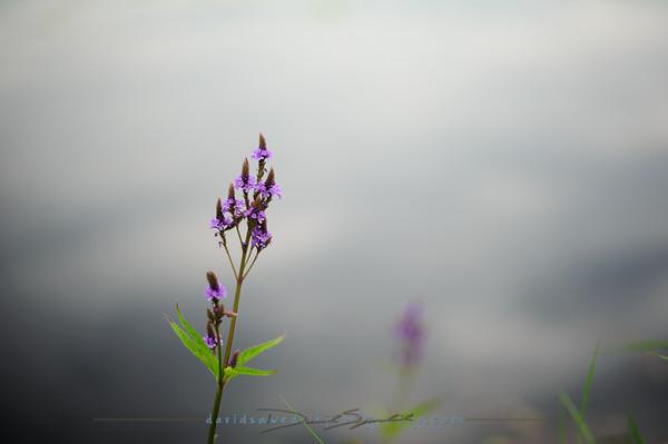 Reflecting Purple