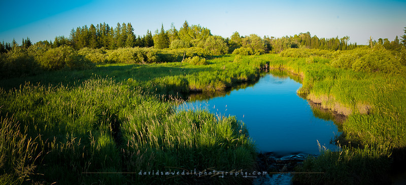 Swamp Grass Creek and the Evening Glow